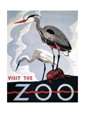 Visit the Zoo Poster with Two Herons Giclee Print