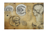 Nervous System Leonardo Da Vinci's Drawing Giclee Print