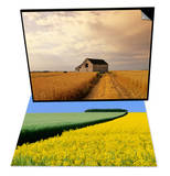 Old Barn in Maturing Spring Wheat Field, Manitoba, Canada & Barley and Blooming Canola Plants Set Print by Dave Reede