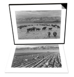 Cattle in South Farm & Farm, Farm Workers, Mt. Williamson in Background Set Posters by Ansel Adams