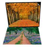 Sycamore Trees in Autumn & Wildflowers Along a Dirt Road Set Prints by Cindy Kassab
