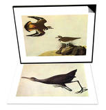 Killdeer & Limpkin Set Prints by John James Audubon