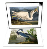 "Great White Heron from ""Birds of America"" & Louisiana Heron from ""Birds of America"" Set Posters by John James Audubon"