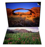 Landscape Arch in Arches National Park & Blooming Wildflowers in Cumberland Basin Set Posters by David Muench