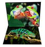Red Eye Tree Frogs, Native to Central America & Rainbow Panther Chameleon, Native to Madagascar Set Prints by David Northcott