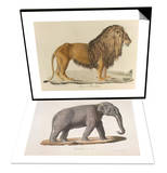 a Barbary Lion & An Asian Elephant Set Posters