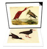 Scarlet Ibis & Black Oystercatcher Set Prints by John James Audubon