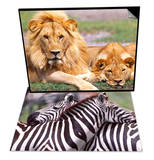 Pair of African Lions, Tanzania & Zebras at Rest, Tanzania Set Prints by David Northcott