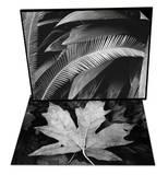 Palms, Bronx Botanical Gardens, 1945 & Maple Leaf Set Posters by Brett Weston
