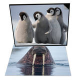Emperor Penguins in Antarctica & Walrus swimming Set Posters by Paul Souders