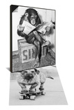 Chimpanzee Reading Newspaper & Dog Riding Skateboard Set Art by  Bettmann