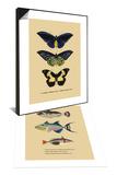 Papilio Urvillianus, Guer & Baliste du Grand Ocean Set Posters