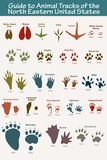 North Eastern Animal Tracks Posters
