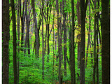 Anna Miller - Yellowwood State Forest, Indiana, USA - Fotografik Baskı