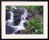 Waterfall and Wildflowers, Ouray, San Juan Mountains, Rocky Mountains, Colorado, USA Framed Photographic Print by Rolf Nussbaumer