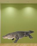 American Alligator Autocollant mural