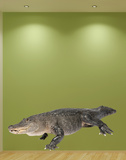 American Alligator Wall Decal