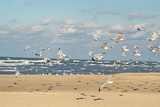 Flock of seaguls on the beaches of Lake Michigan, Indiana Dunes, Indiana, USA Photographic Print by Anna Miller