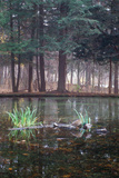 Autumn around a pond in Eagle Creek Park, Indianapolis, Indiana, USA Photographic Print by Anna Miller