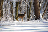 Winter in Eagle Creek Park, Indianapolis, Indiana, USA Photographic Print by Anna Miller