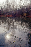 Trees reflecting in pond, late autumn, Eagle Creek Park, Indianapolis, Indiana, USA Photographic Print by Anna Miller