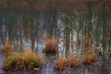 Pond reflecting bare branches and trees in Indianapolis, Indiana, USA Photographic Print by Anna Miller