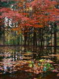 Red leaves over pond, Eagle Creek Park, Indianapolis, Indiana, USA Photographic Print by Anna Miller