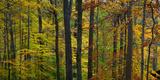 Fall in McCormics Creek State Park, Indiana, USA Reprodukcja zdjęcia autor Anna Miller