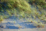 Grass on the sands of Lake Michigan, Indiana Dunes, Indiana, USA Photographic Print by Anna Miller