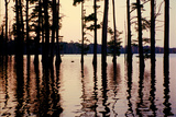 Cypress trees in the waters of Hovey Lake at sunset, Indiana, USA Photographic Print by Anna Miller