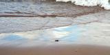 Indiana Dunes beach and Lake Michigan, Indiana Dunes, Indiana, USA Reprodukcja zdjęcia autor Anna Miller