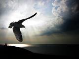 Seagul in flight over Lake Michigan beach, Indiana Dunes, Indiana, USA Papier Photo par Anna Miller