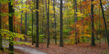 Fall in McCormics Creek State Park, Indiana, USA Photographic Print by Anna Miller
