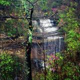 Spring in Clifty Creek State Park, Indiana, USA Reprodukcja zdjęcia autor Anna Miller