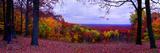 Autumn vista in Brown County State Park, Indiana, USA Reprodukcja zdjęcia autor Anna Miller