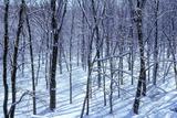 Winter in Eagle Creek Park, Indianapolis, Indiana, USA Lámina fotográfica por Anna Miller