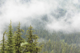 USA, Washington, Mount Rainier NP. Landscape of Fog in Forest Photographic Print by Jaynes Gallery