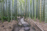 Japan, Kanagawa, Kamakura, Hokokuji Temple Garden Photographic Print by Rob Tilley
