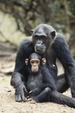 Tanzania, Gombe Stream NP, Mother Chimp and Her Child Sitting Photographic Print by Kristin Mosher