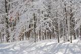 Anna Miller - Winter in Eagle Creek Park, Indianapolis, Indiana, USA - Fotografik Baskı