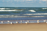 Flock of seaguls on the beaches of Lake Michigan, Indiana Dunes, Indiana, USA Papier Photo par Anna Miller