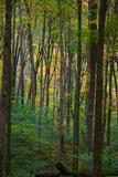 Anna Miller - Yellowwood State Forest, Indiana, USA - Fotografik Baskı