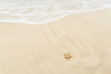 Caribbean, Anguilla. Starfish Sitting on Beach as Tide Comes In Photographic Print by Alida Latham