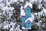 Birdhouse Near Inkberry Bush in Winter, Marion, Illinois, Usa Photographic Print by Richard ans Susan Day