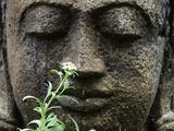 Stone Garden Statue with Flower Photographic Print by Matt Freedman