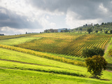 Italy, Tuscany. Farm House and Vineyard in the Chianti Region Photographic Print by Julie Eggers