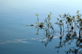 Eagle Creek Reservoir reflections with aquatic plants, Indianapolis, Indiana, USA Photographic Print by Anna Miller