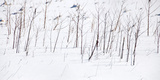 Bare branches surrounded by fresh snow, Eagle Creek Park, Indianapolis, Indiana, USA Photographic Print by Anna Miller