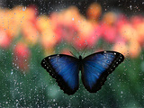 Butterfly in the White River Gardens, Indianapolis, Indiana, USA Photographic Print by Anna Miller