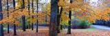 Fall foliage in Eagle Creek Park, Indianapolis, Indiana, USA Reprodukcja zdjęcia autor Anna Miller